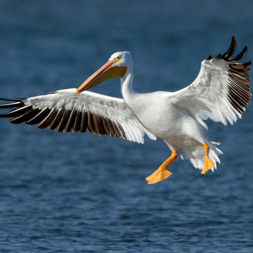 White Pelican Guest House